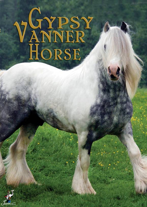Gypsy Vanner Horse (Retail / Rental)