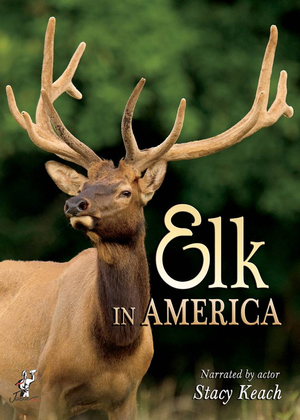 Elk in America (Retail / Rental)