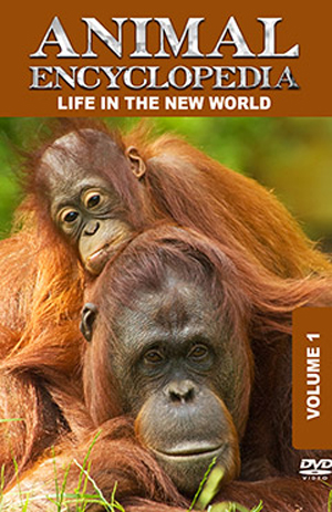 Animal Encyclopedia: Volume 1 - Life in the New World (2012) (Retail / Rental)