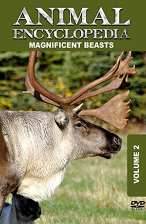 Animal Encyclopedia: Volume 2 - Magnificent Beasts (2012) (Retail / Rental)