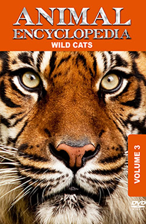 Animal Encyclopedia: Volume 3 - Wild Cats (2012) (Retail / Rental)