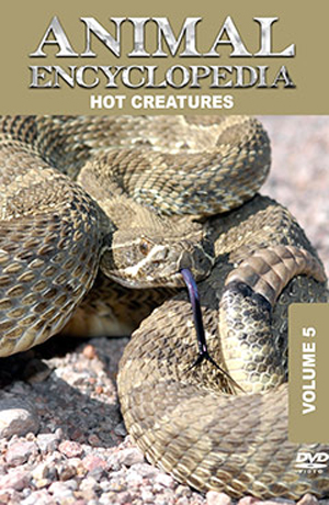 Animal Encyclopedia: Volume 5 - Hot Creatures (2012) (Retail / Rental)