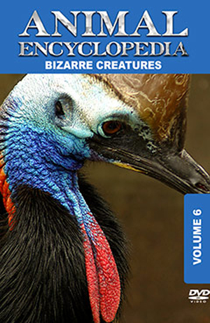 Animal Encyclopedia: Volume 6 - Bizarre Creatures (2012) (Retail / Rental)