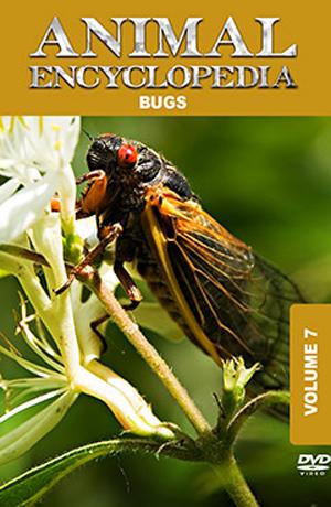Animal Encyclopedia: Volume 7 - Bugs (2012) (Retail / Rental)