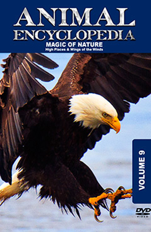 Animal Encyclopedia: Volume 9 - High Places and Wings of the Wind (2012) (Retail / Rental)