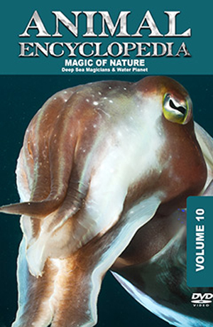 Animal Encyclopedia: Volume 10 - Deep Sea Magicians (2012) (Retail / Rental)