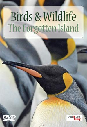 Birds and Wildlife: The Forgotten Island (Retail / Rental)