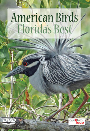 American Birds: Florida's Best (Retail / Rental)