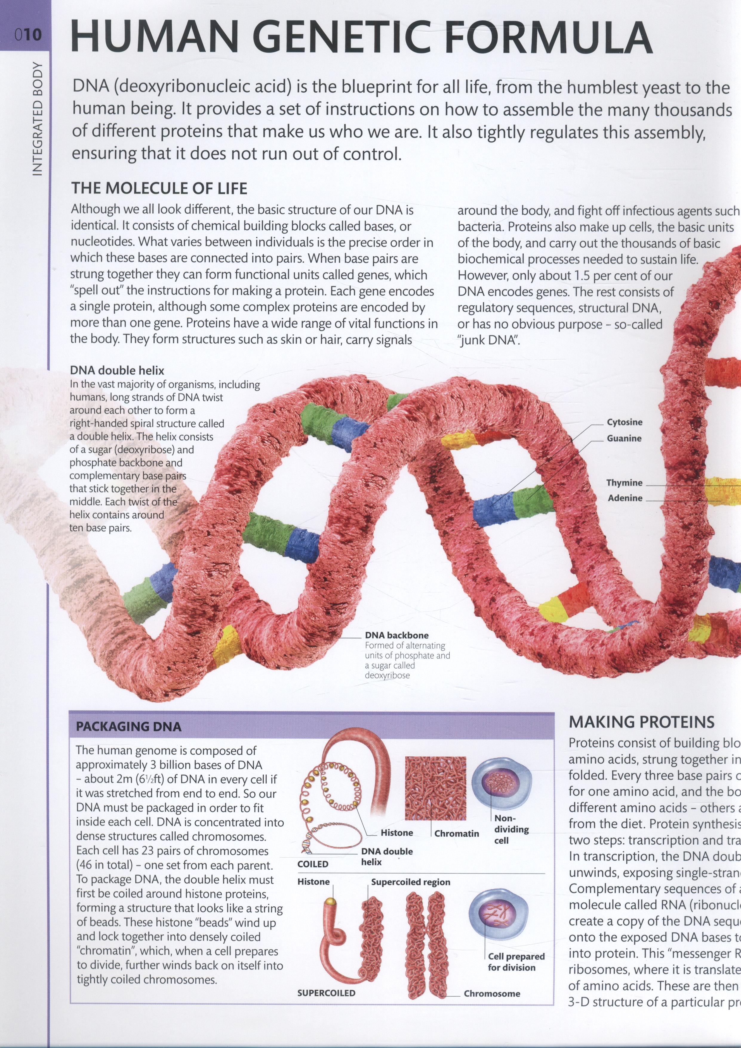 human anatomy the definitive visual guide