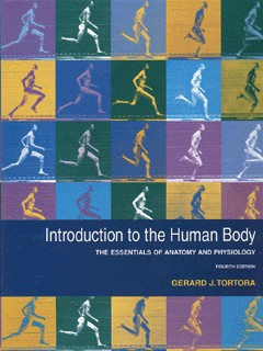 Image for Introduction to the human body  : the essentials of anatomy and physiology