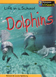 Image for Dolphins  : life in a school