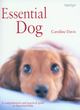 Image for Essential dog  : the ultimate owner's guide to caring for your dog
