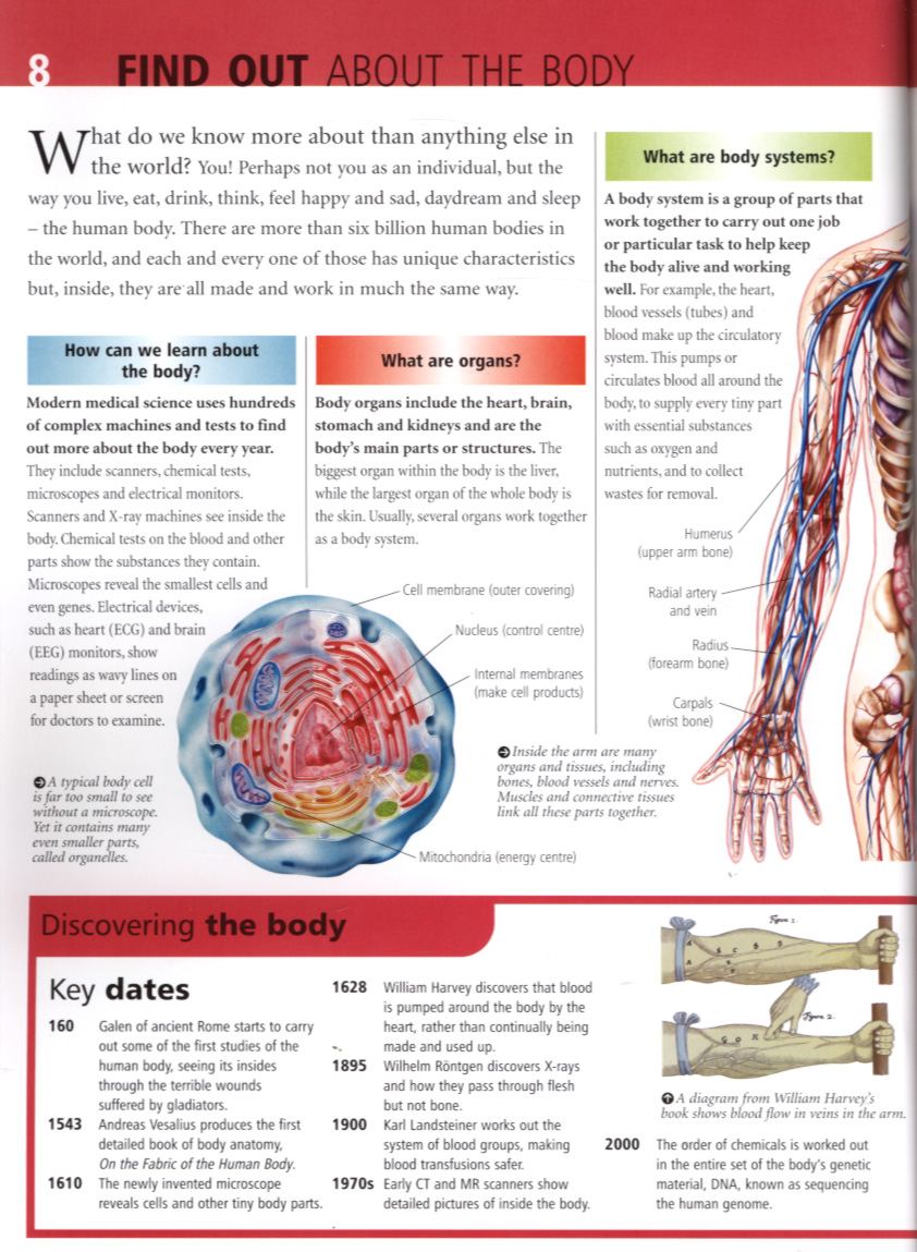 What about the human body? by Matthews, Ruper (9781842367902