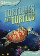 Image for Tortoises and turtles