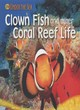 Image for Clown fish and other coral reef life