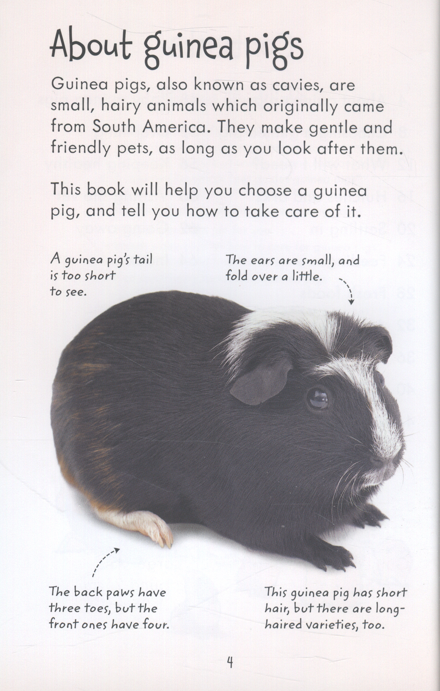 Looking after guinea pigs by Howell, Laura (9781409561880
